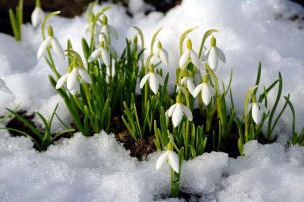 Народный синоптик Леонид Горбань: «Весна будет поздней»