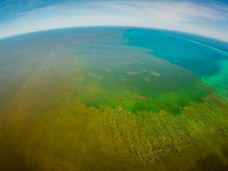 Большой Барьерный риф заволокла грязная пелена