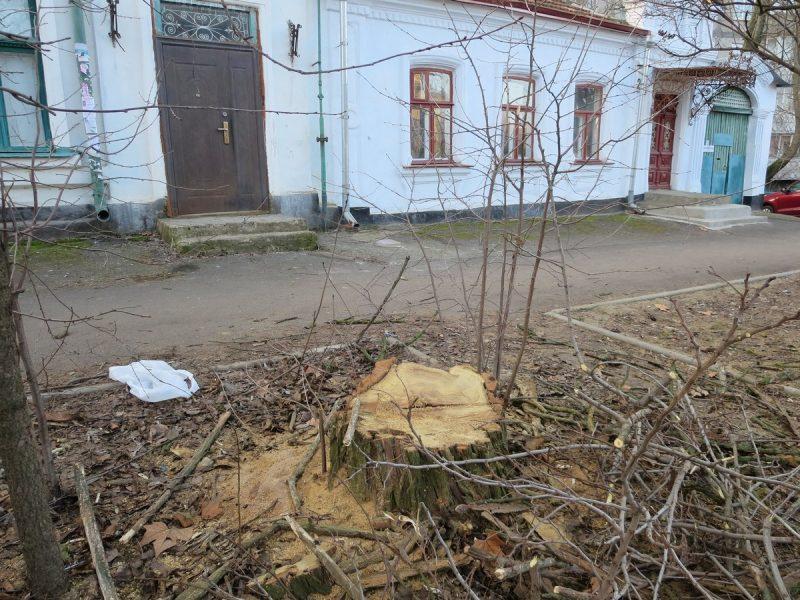 В центре Николаева спили здоровые акации. В райадминистрации говорят, что не они
