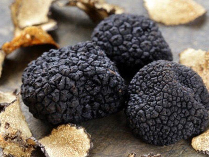 В Херсонском агроуниверситете стартует проект по выращиванию черного трюфеля