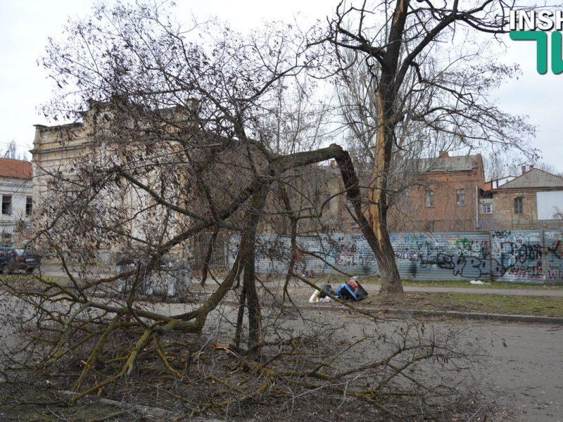 В Николаеве у акации откололась часть ствола с массивной веткой – проезд по Шнеерсона перекрыт