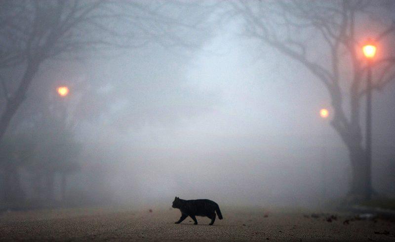 В понедельник Украину ждут сильные туманы