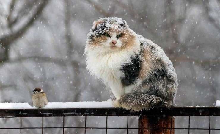 Синоптики рассказали, когда прекратятся снегопады