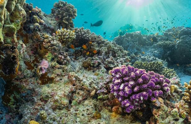У юго-восточного побережья Италии впервые был найден коралловый риф