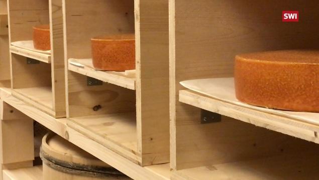 Эксперимент: в Швейцарии решили «обработать» вызревающий сыр музыкой Led Zeppelin