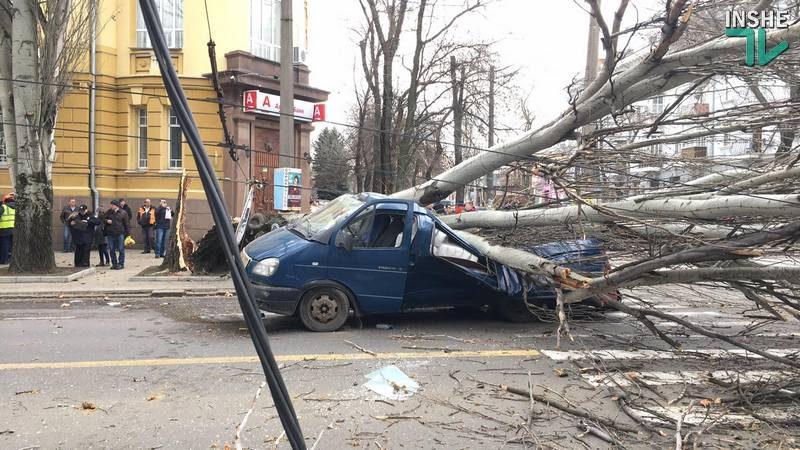 В Николаеве тополь рухнул прямо на проезжую часть – под ним оказалась машина