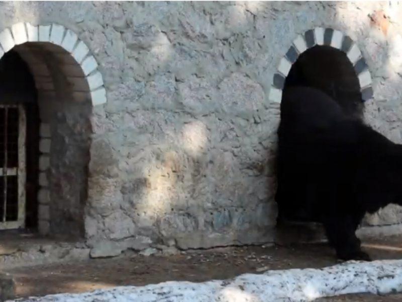 В Харьковском зоопарке проснулись медведи