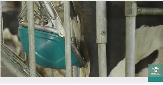 Нидерландская компания изобрела туалет для коров