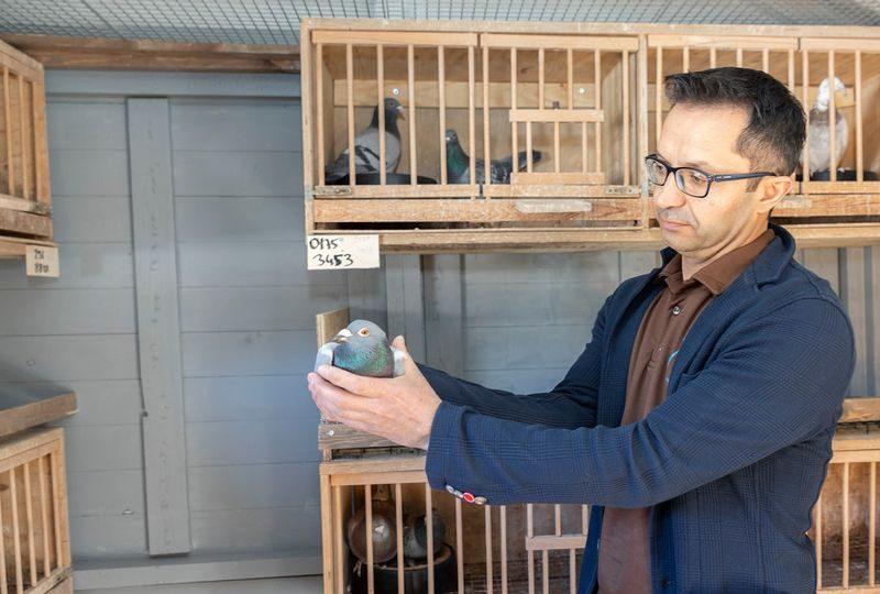 С Канарских островов в Финляндию почтовый голубь прилетел в отсеке шасси самолета