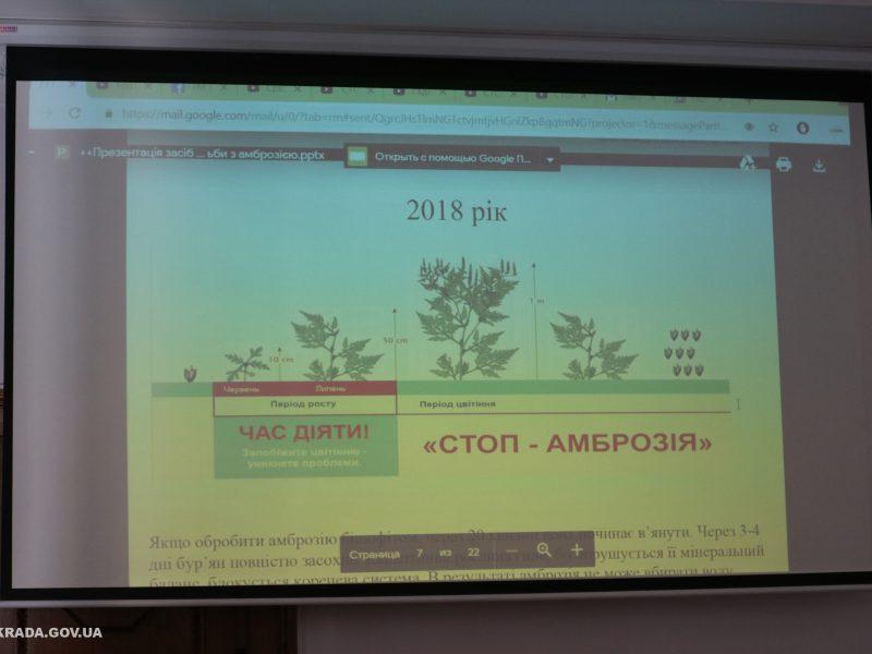 Панацея от амброзии? Мэр Николаева предлагает закупить и протестировать препарат для борьбы с растением-аллергеном