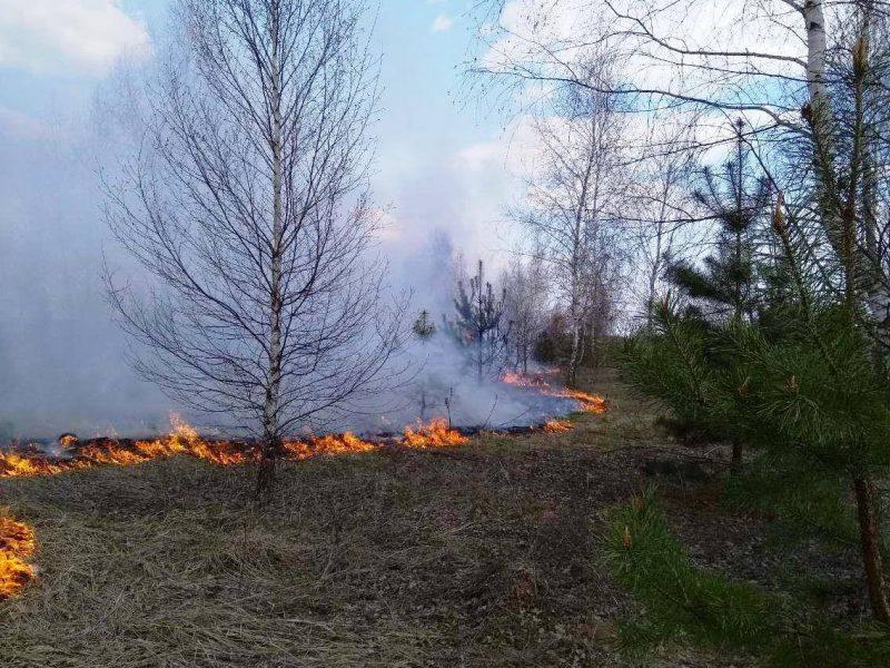 Под Черниговом горит лес