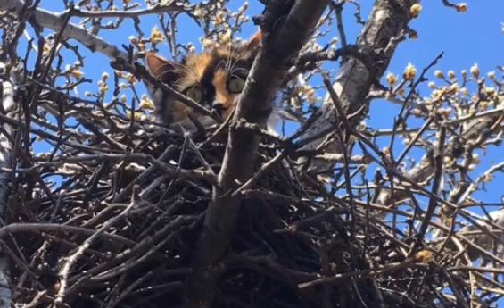 В Харькове кошка с котятами поселилась в птичьем гнезде на дереве