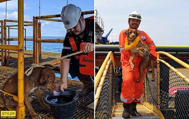 217 километров от берега: в открытом море спасли необычного пса