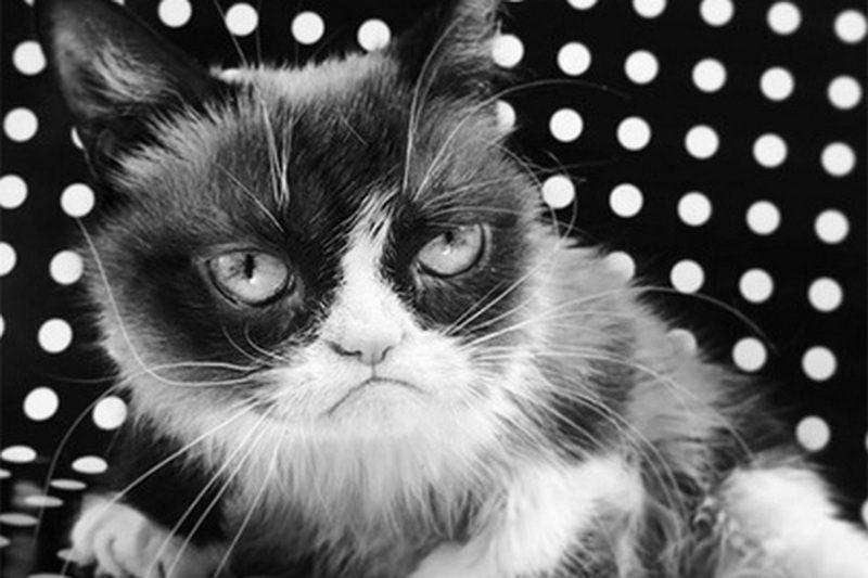 Умерла самая сердитая кошка в мире