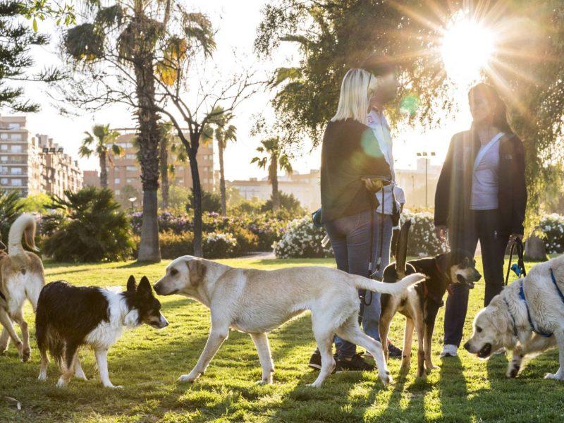 В Испании домашних животных больше, чем детей до 15 лет. И там по фекалиям собак определяют, чей хозяин их не убрал