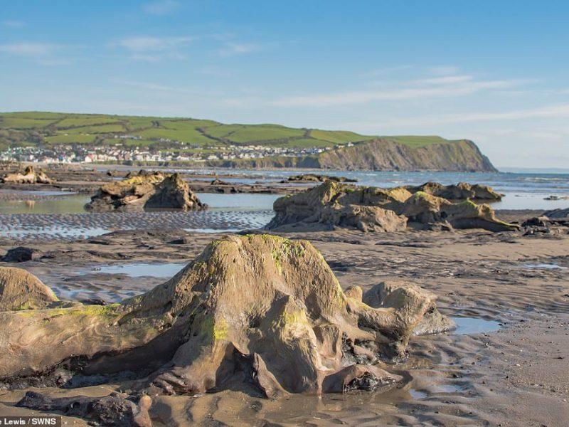 """Ураган """"Ханна"""" на западном побережье Уэльса «откопал» доисторический лес (ФОТО)"""