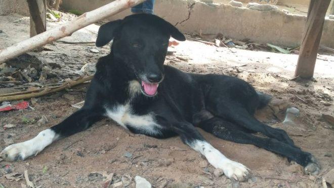 В Таиланде собака-инвалид спасла похороненного заживо младенца (ФОТО)