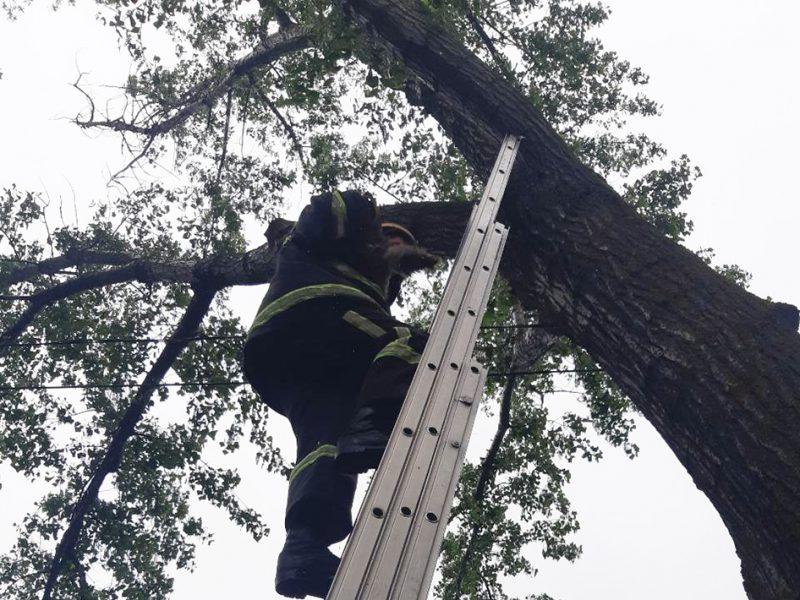 В Николаеве кот сбежал из дома и залез на дерево. Хозяйка вызвала спасателей