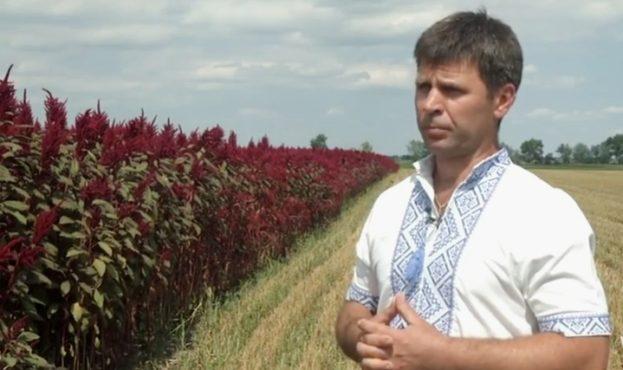 Эксперимент. Украинская экоферма будет выращивать кур в зарослях амаранта