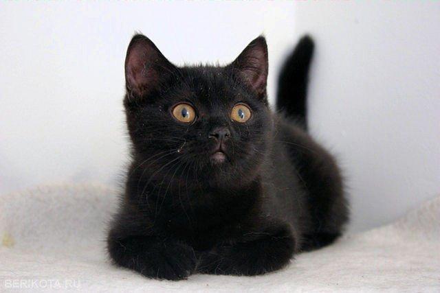 Будет Угольком: снятый николаевскими спасателями с дерева котенок нашел дом (ВИДЕО)
