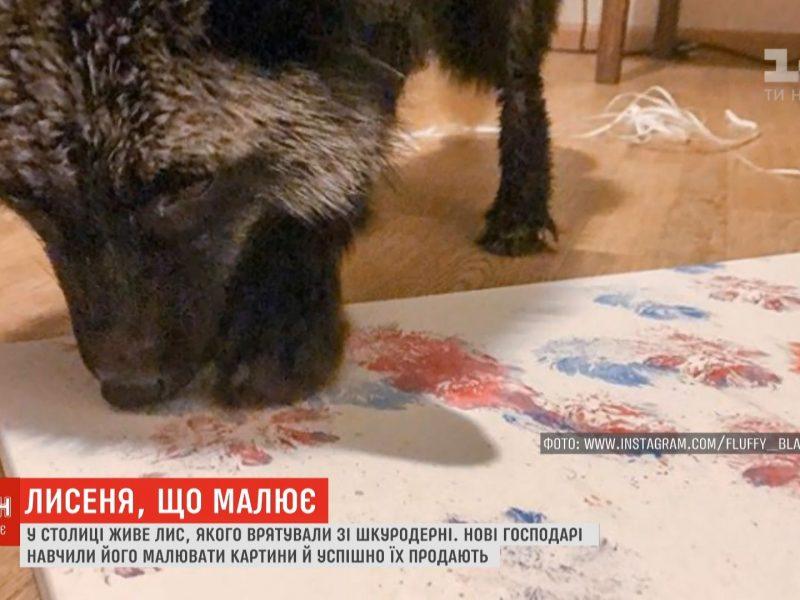 В Киеве лисенок рисует картины, которые продают по 13 тысяч гривень (видео)