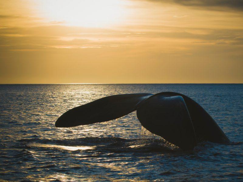 У берегов Канады нашли шесть погибших китов