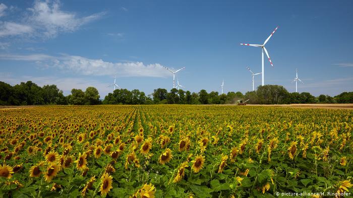 В Германии доля «зеленой энергетики» превысила генерацию ТЭС и АЭС