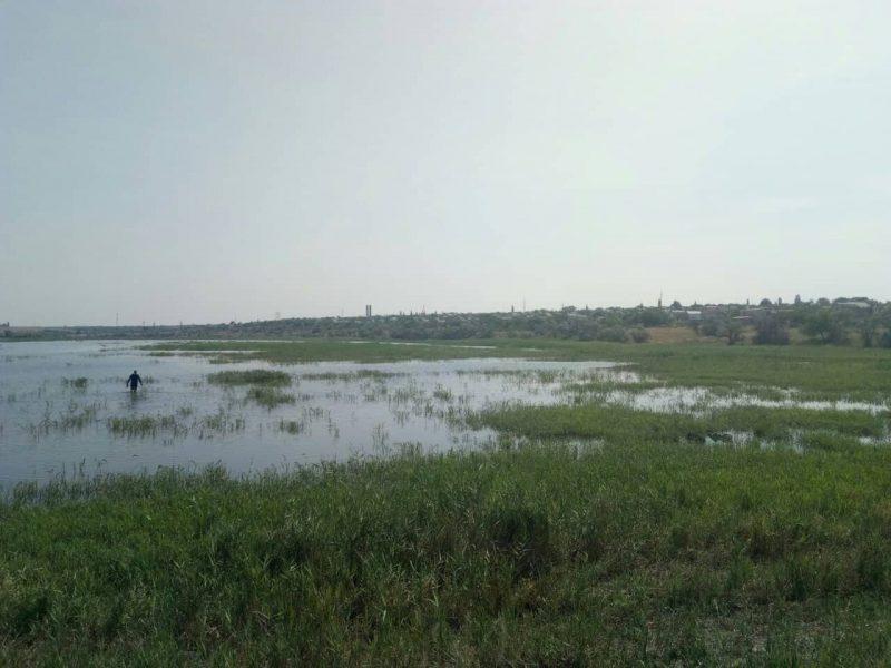 На Николаевщине в пруду утонул пастух (ФОТО)