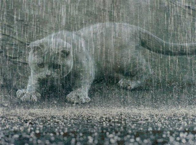 Завтра на Николаевщине будет тепло и местами – дождливо – гидрометцентр