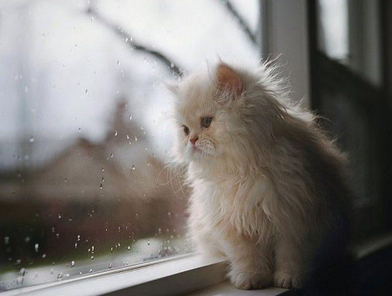 Завтра в Украине дожди, температура до +11