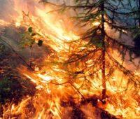 Варила медвежью мочу: в Калифорнии судят русскую шаманку за поджог 10 тыс.га леса