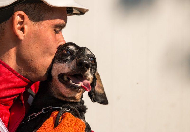 Единственная. В ТОП-100 лучших спасательных собак мира вошла такса Крис и три овчарки из Украины (ФОТО)
