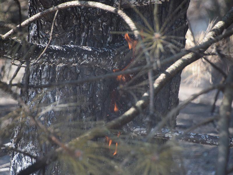 В Балабановском лесу под Николаевом выгорело 4,6 тыс.кв.м хвойной подстилки (ФОТО, ВИДЕО)