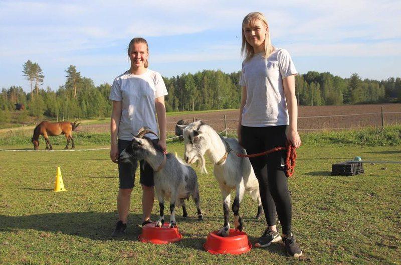 И зайца можно научить курить: в Финляндии козлы проходят полосу препятствий как собаки (ВИДЕО)