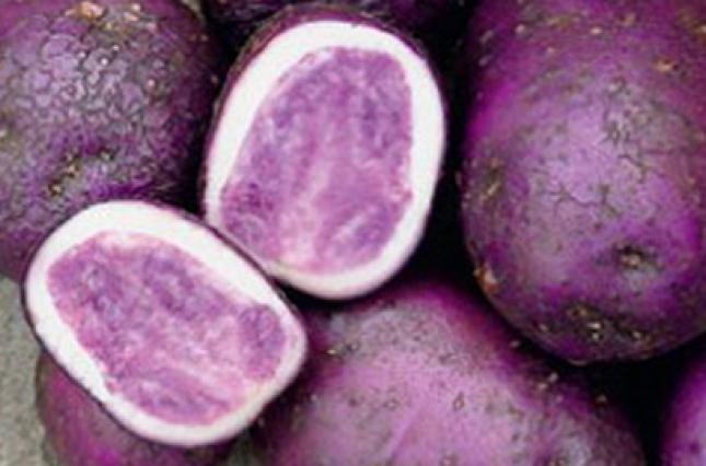 В Украине стали выращивать разноцветный картофель