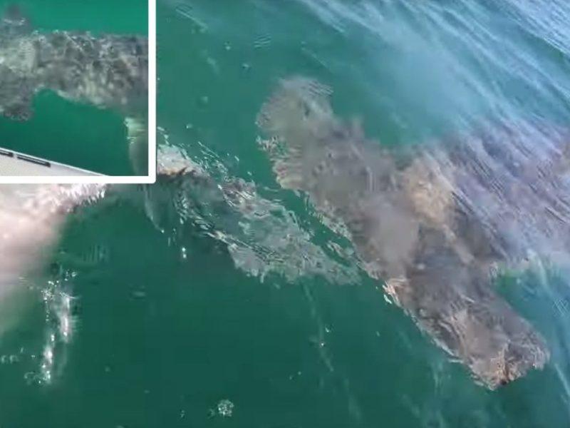 Спортивная рыбалка в США – опасное дело. Акула вырвала улов у рыбака, чуть не оттяпав руку (ВИДЕО)