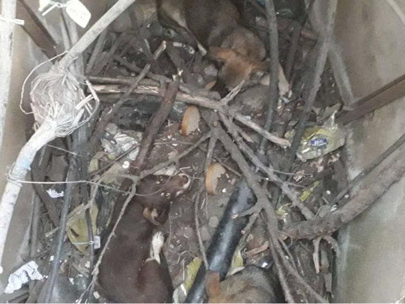 На Николаевщине спасатели достали трех собак из колодца (ФОТО)