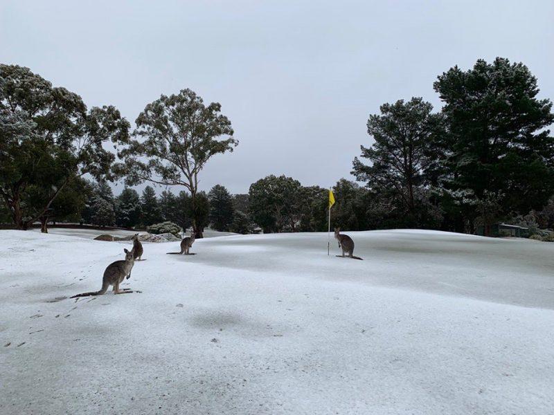 Холодная зима в Австралии: кенгуру резвятся в снегу (ВИДЕО)