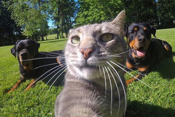 Сеть покорил кот, который делает забавные селфи не хуже людей (ФОТО, ВИДЕО)
