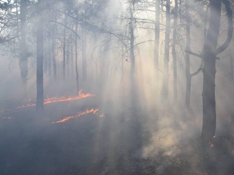 Поджог или халатность? Под Николаевом дважды горел один и тот же лес