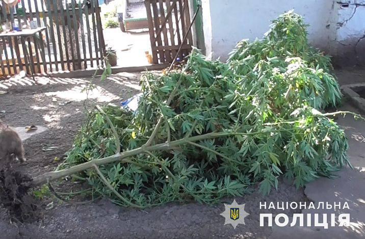 В Вознесенском районе полиция изъяла кусты конопли и 0,5 кг готовой к употреблению марихуаны (ФОТО)
