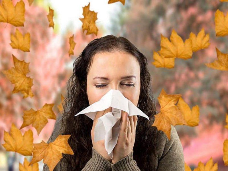 Прогноз для аллергиков: амброзия все еще с нами, а на подходе споры и клещи
