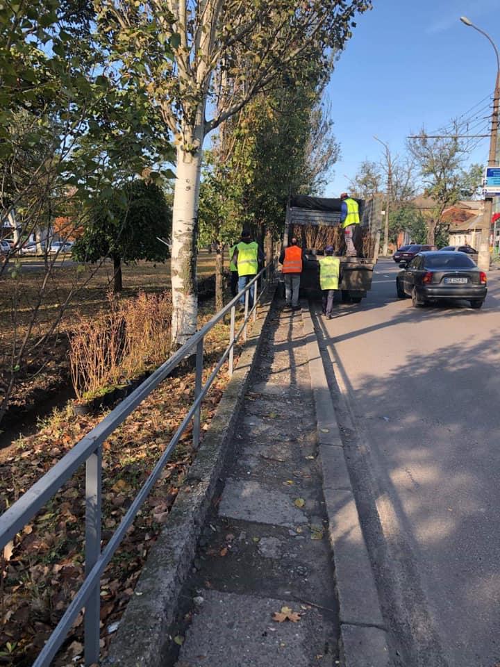 В Николаеве массово стартовала осенняя посадка деревьев и кустов (ФОТО) 1