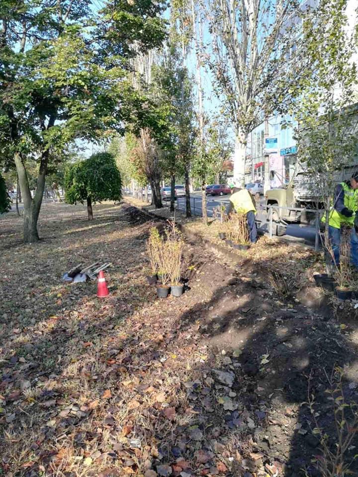 В Николаеве массово стартовала осенняя посадка деревьев и кустов (ФОТО) 5
