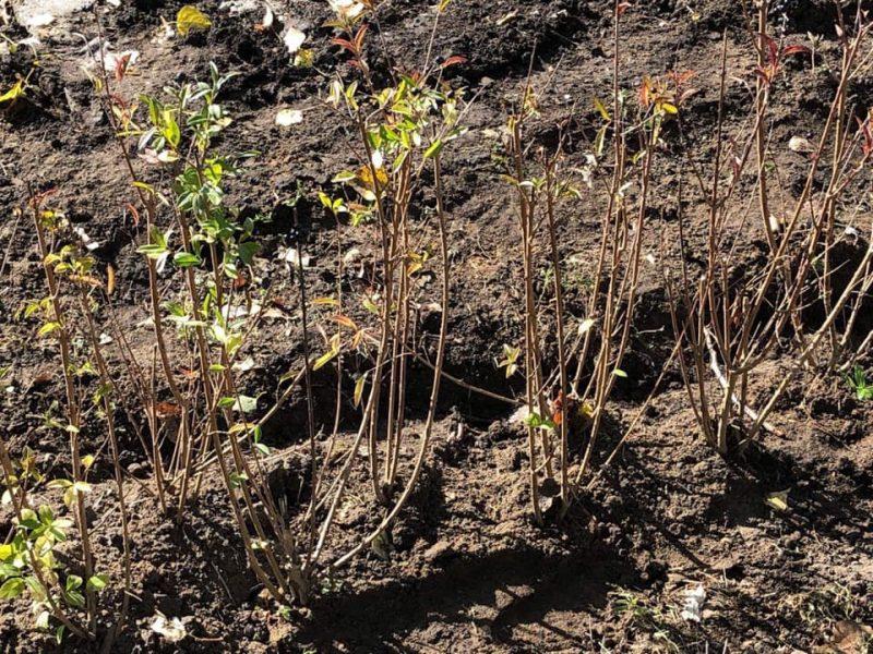 В Николаеве массово стартовала осенняя посадка деревьев и кустов (ФОТО)
