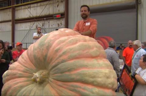 Тяжелее автомобиля:  гигантскую тыкву вырастил американский фермер