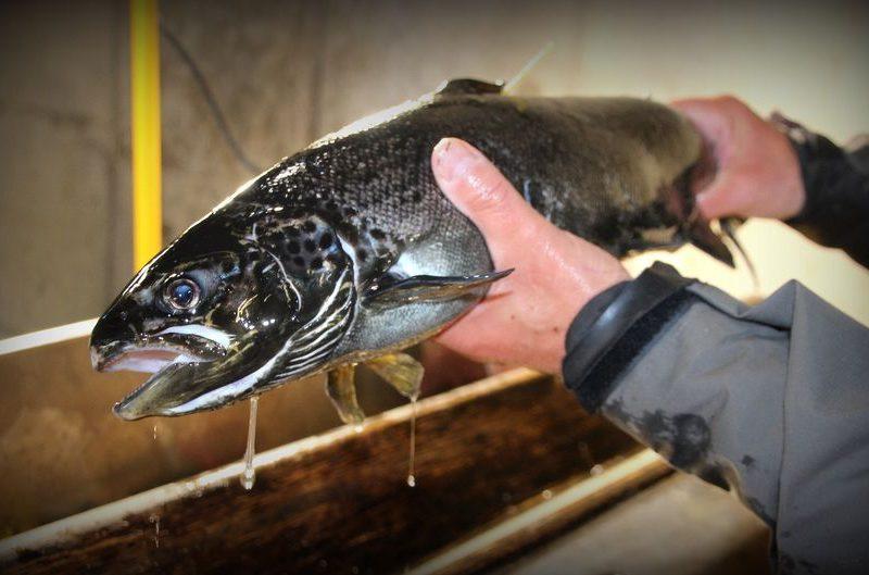 В Финляндии браконьер заплатит 7,5 тысяч евро за одну рыбу
