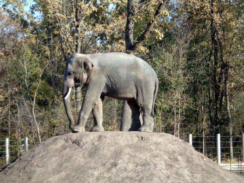 Два слона уже едут в Николаевский зоопарк! (ФОТО)