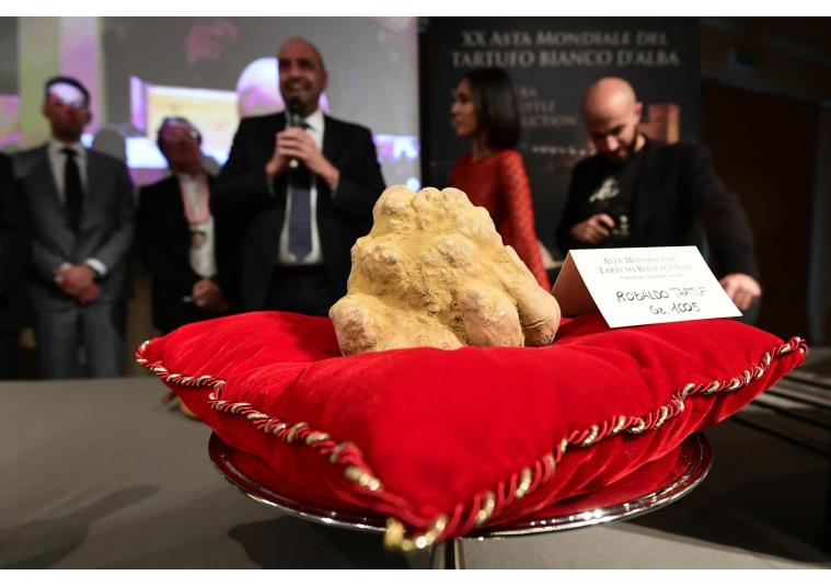 На Международной выставке в Италии килограммовый трюфель купили за 120 тыс.евро (ФОТО)
