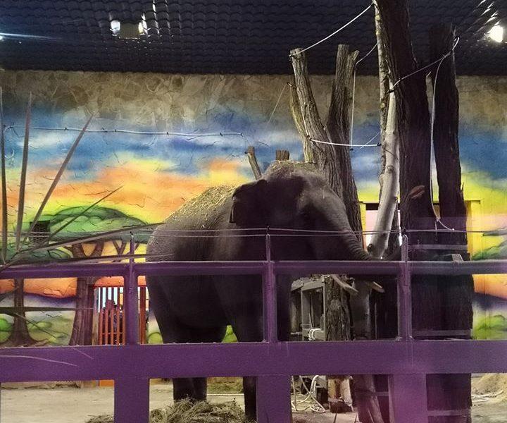 В зоопарк Николаева привезли слонов (ФОТО)